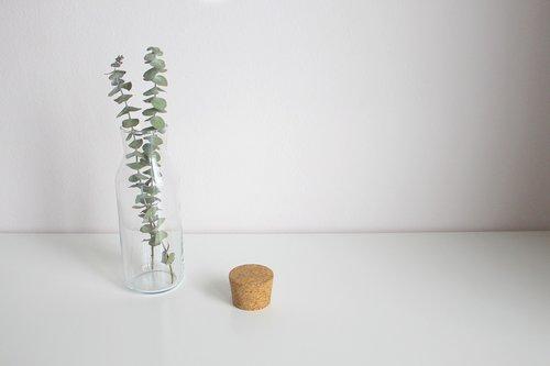 eucalyptus  leaves  vase