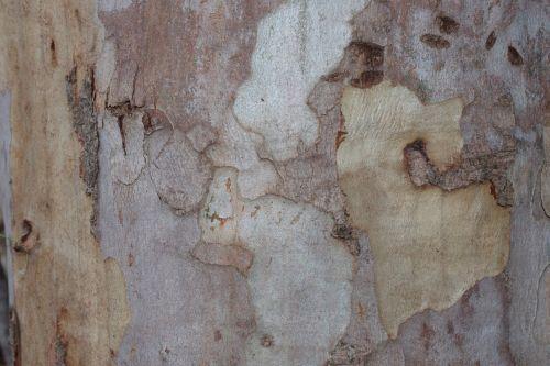 Eucalyptus Background