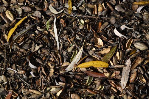 Eucalyptus Leaf Debris Background
