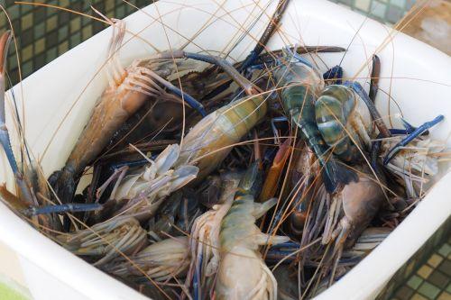 even water shrimp shrimp food