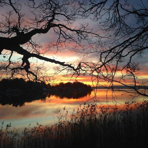 evening water tree