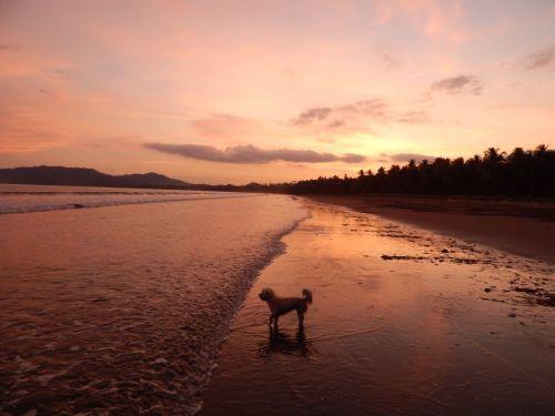 Evening Light On Beach
