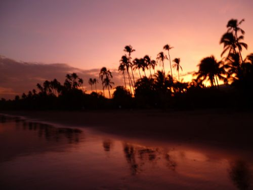 Evening Light On The Beach