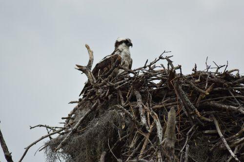 everglades national park nest