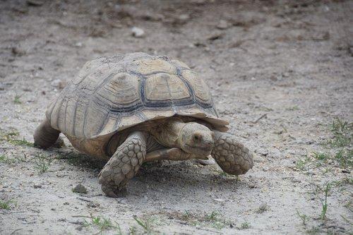 everglades  turtle  florida