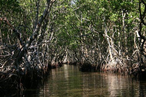 everglades florida swamp