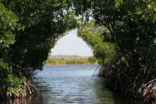 everglades mangroves bogs