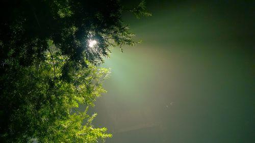 evergreen hope hue
