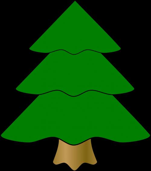 evergreen fir tree green