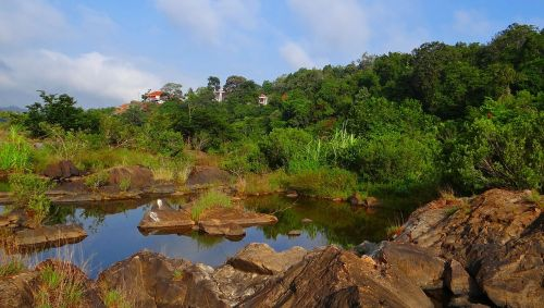evergreen forest western ghats sharavati river