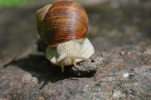 evertebrat slowly snail