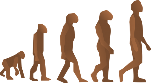 evolution human walking