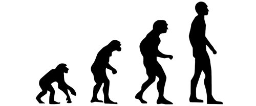 evolution human evolution the theory of evolution