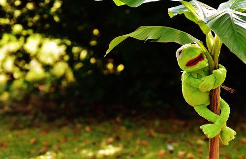 exasperate kermit frog
