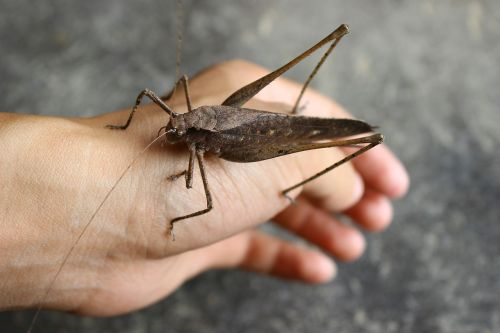 exclusive pet insect brown