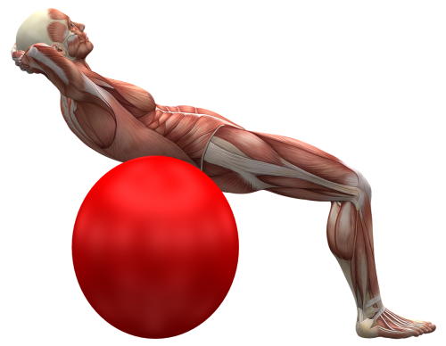 exercise ball exercise muscle