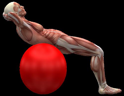 Nemokamos nuotraukos nugaros raumenys paieška, atsisiuntimas
