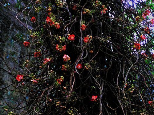 exotic tree nature