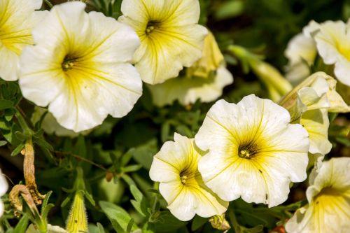 exotic flower garden flowers