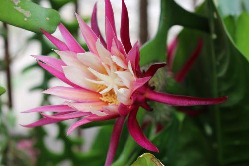 exotic flowers plants garden