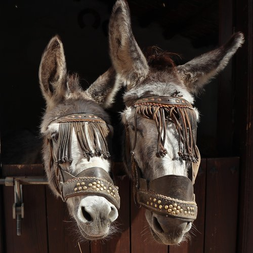 expensive  donkeys  donkey
