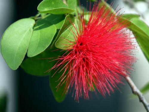 Explosion Flower Petal