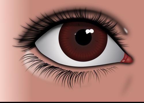 eye brown eye brown