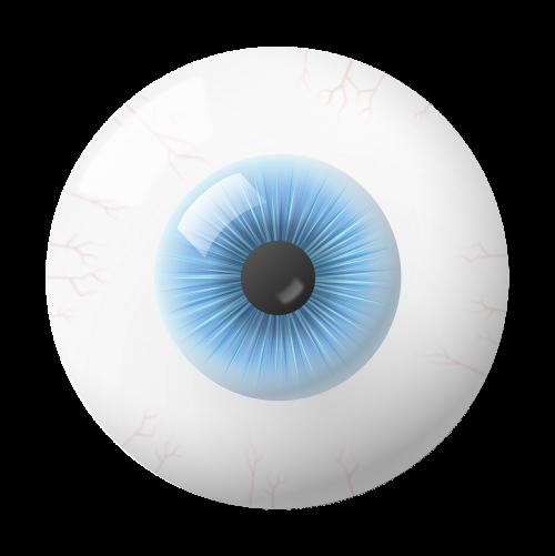 eye iris globe