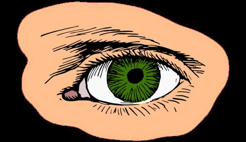 eye eyelash green