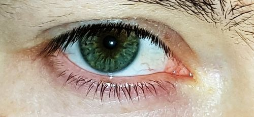 eye green eyelashes