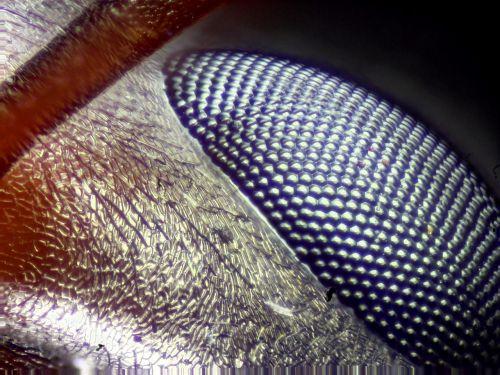 eye eye close-up bug eye