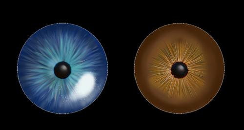 eye  iris  blue