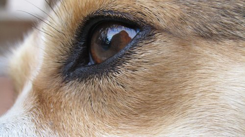eye  dogeye  lolli