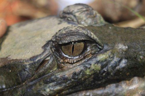 eye  wildlife  carnivore