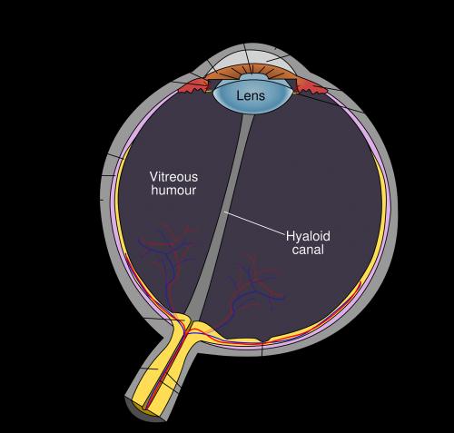 eye diagram eyeball