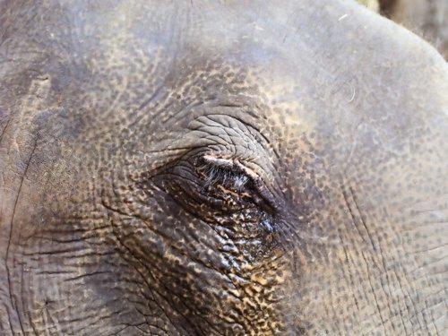 eye  elephant  wrinkles