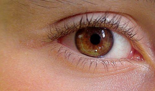 eye human eye the anatomy of a