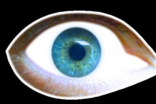 eye iris eyelid