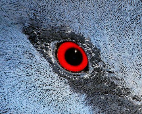 eye macro bird
