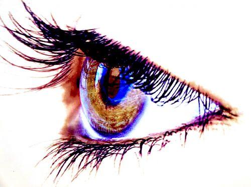 eye eyelid eyelashes