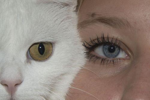 eyes cat face