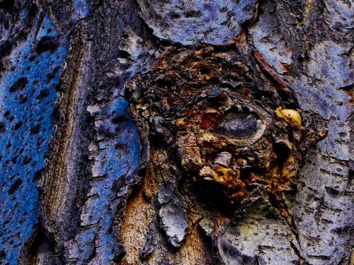 Eye In The Tree