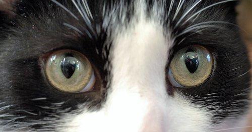 eyeball  eyesight  eyelash
