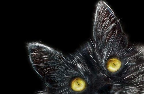eyes  golden eyes  cat eyes