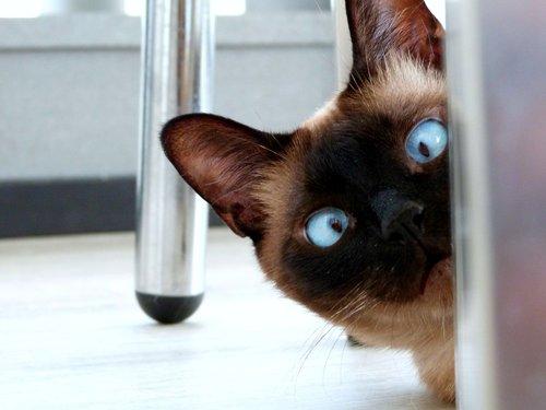 eyes  cat  feline