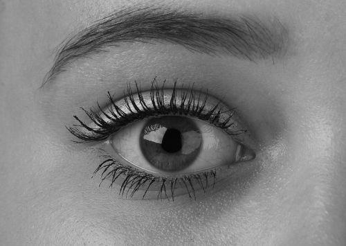 eyes eye algae