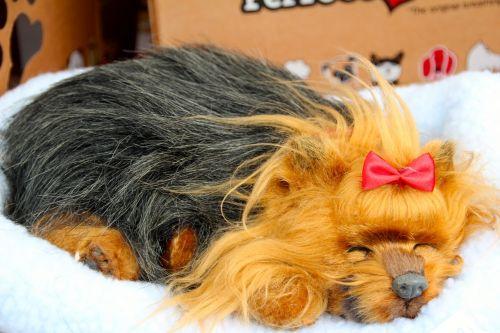 audinio šuo,žaislai,turgus,pirkti,prekyba,pardavimas,verslas