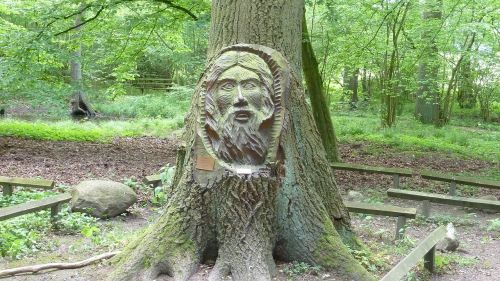 face tree face nature