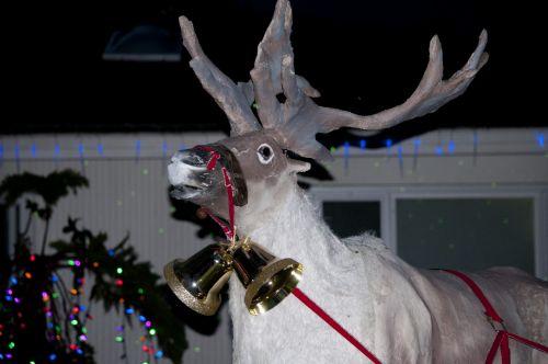 Face Of A Reindeer