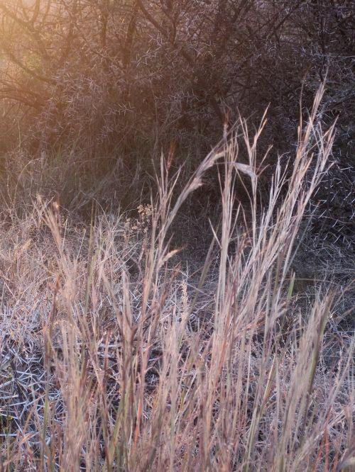 Faded Sun On Grass